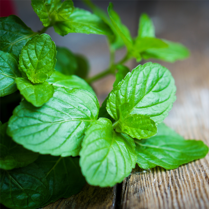 Peppermint for Irritable Bowel Syndrome (IBS)