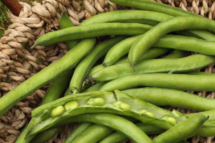 Benefits of Broad Beans