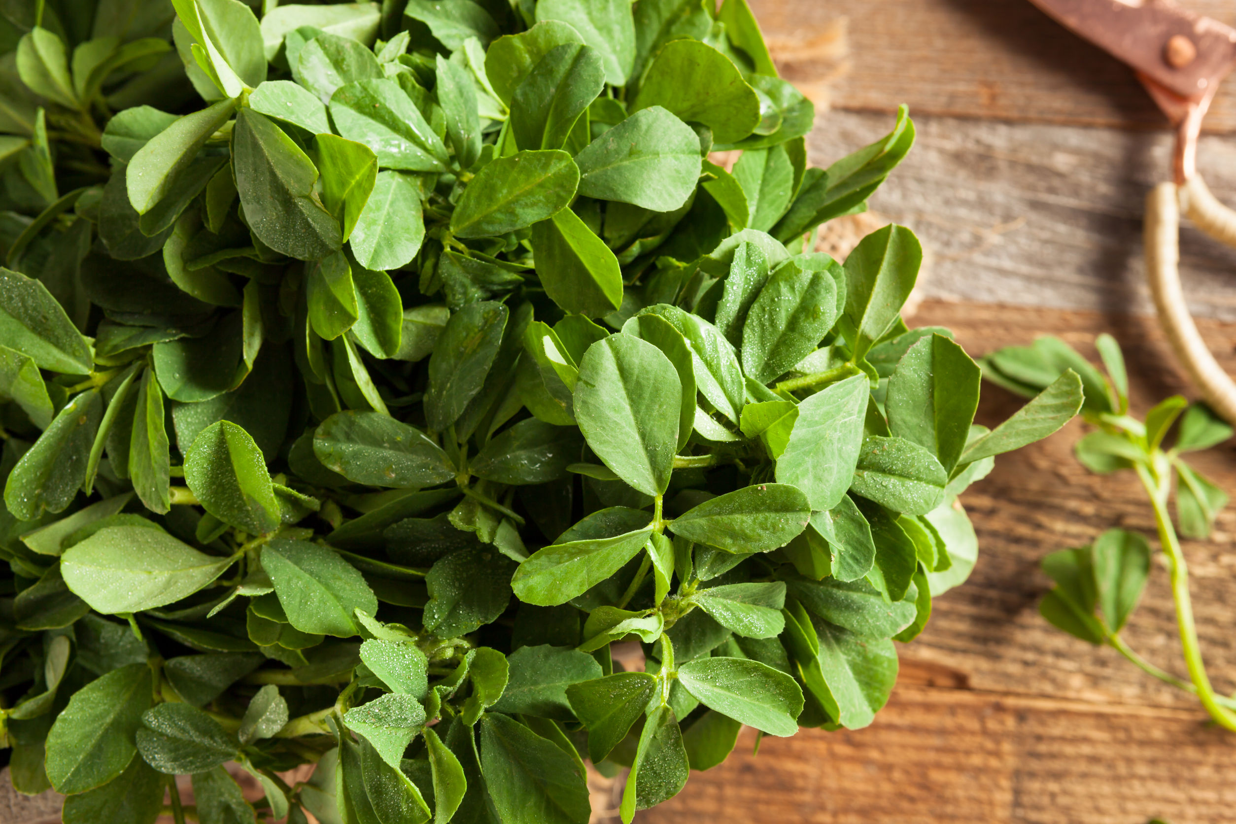 Fight pain with Fenugreek